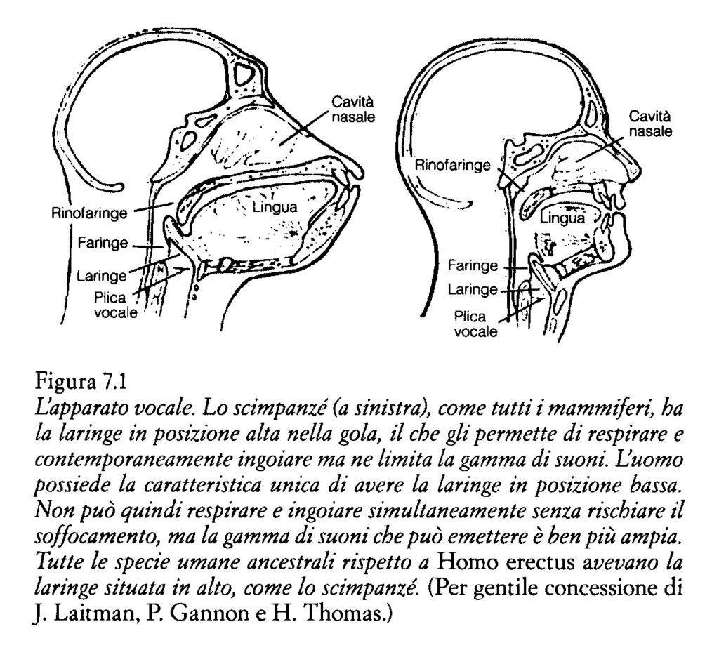 Il mal di gola e la laringofaringite da reflusso blog for Mal di gola da reflusso rimedi